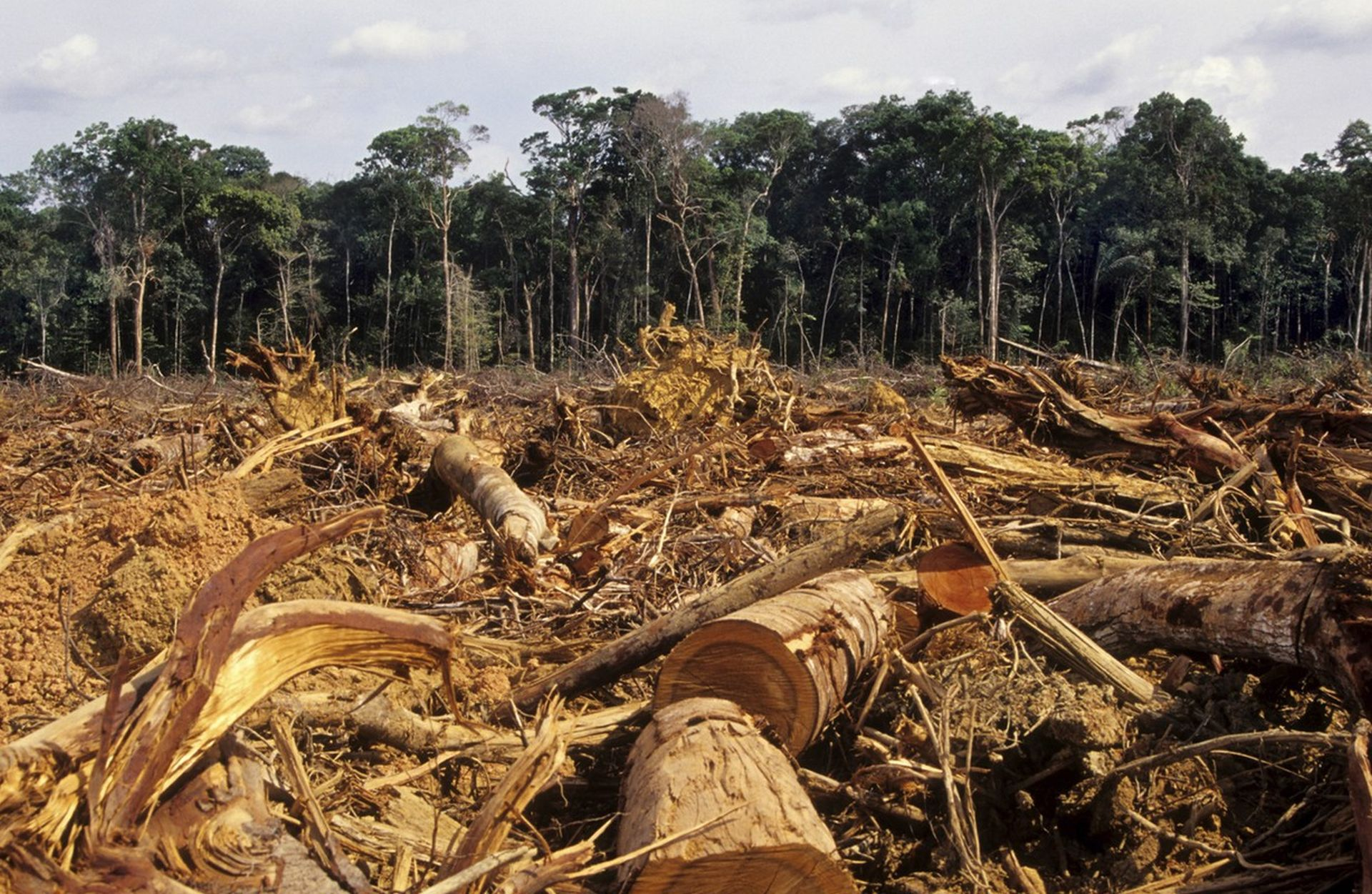 deforestation as a major problem A major contributor to tropical deforestation is the practice of slash-and-burn agriculture, or swidden agriculture (see also shifting agriculture) small-scale farmers clear forests by burning them and then grow crops in the soils fertilized by the ashes.